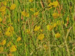 dsc01530 sun on wildflowers
