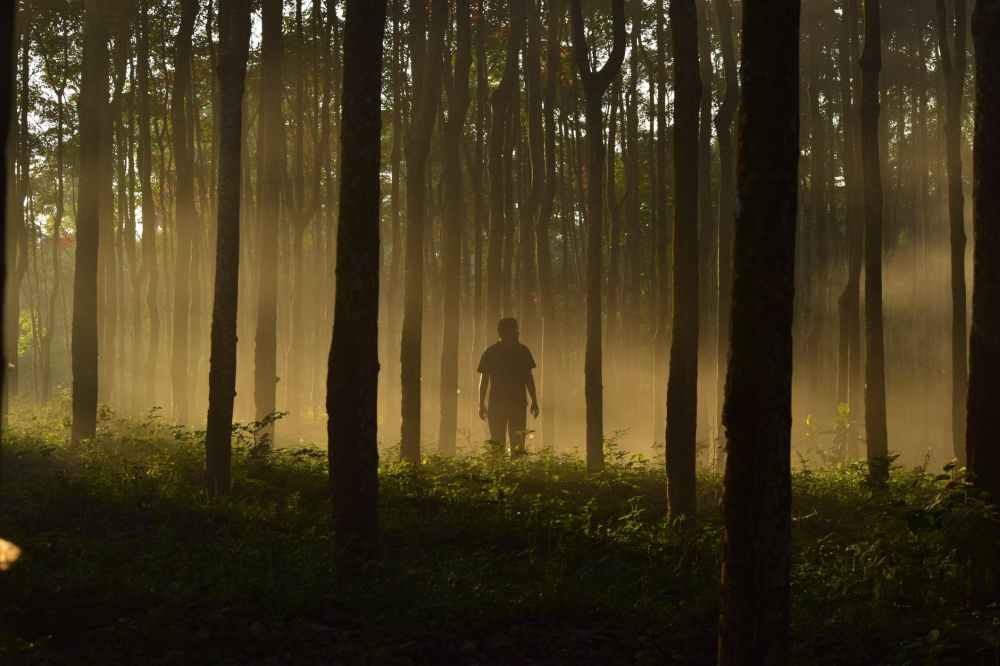 man alone in forest